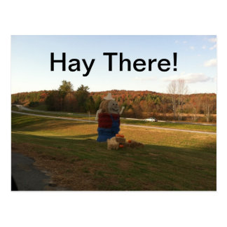 Hay There! Postcard