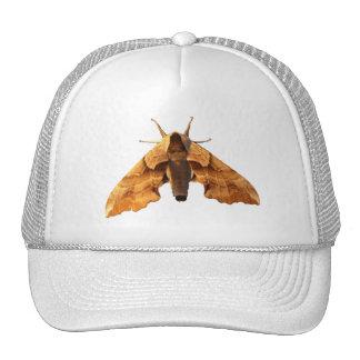 ¡Hay una polilla en su gorra! Gorro