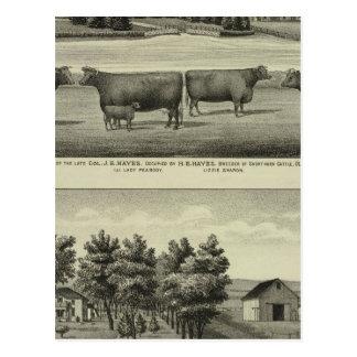Hayes, Olathe, and Ellis Residence and Farm Postcard