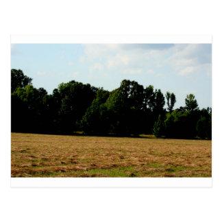 hayfield landscape postcard