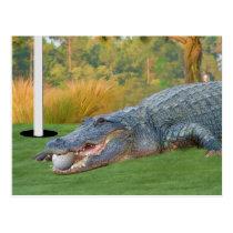 Hazardous Lie Golfing Alligator Postcard