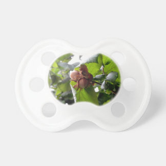 Hazel branches with nuts BooginHead pacifier