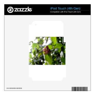 Hazel branches with nuts skins for iPod touch 4G