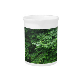 Hazel tree with green leaves in spring beverage pitcher