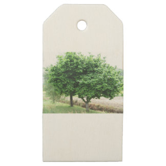 Hazel tree with green leaves in spring wooden gift tags