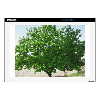 """Hazel tree with green leaves skins for 17"""" laptops"""