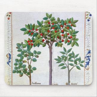 Hazelnut Bush  and Cherry tree Mouse Pad