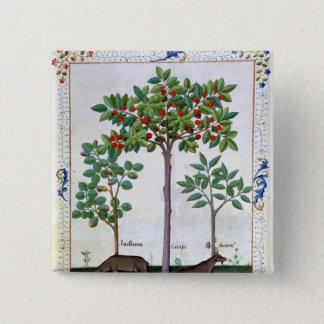 Hazelnut Bush  and Cherry tree Pinback Button