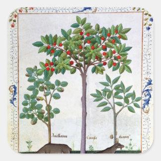 Hazelnut Bush  and Cherry tree Square Stickers