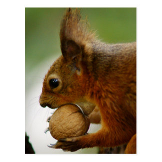 Hazelnuts Are Easier Postcard