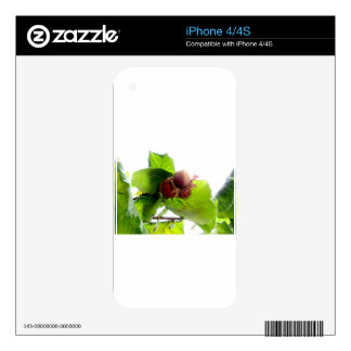 Hazelnuts Decals For The iPhone 4S