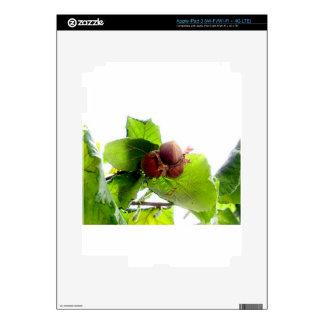 Hazelnuts iPad 3 Skin