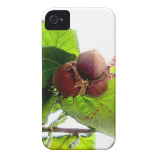Hazelnuts iPhone 4 Covers