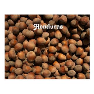 Hazelnuts Postcard