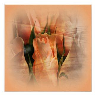 Hazy Apricot Beauty Rose Abstract Poster