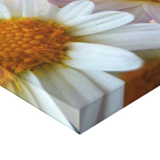 Hazy Day Daisies Stretched Canvas Prints