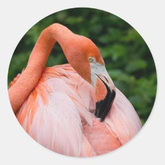 HDR Flamingo Bird Birds Wild Photo Picture Photos Classic Round Sticker