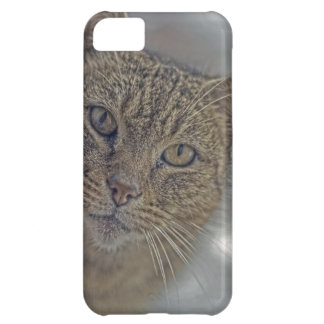 HDR Kitty Kitty Kitty iPhone 5C Cover