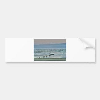 HDR Ocean Beach Seagul Bumper Sticker