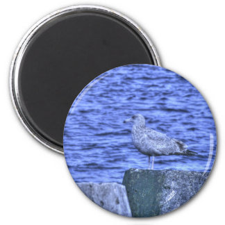 HDR Seagull on Rock Pylon 2 Inch Round Magnet