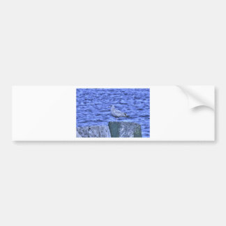 HDR Seagull on Rock Pylon Bumper Stickers