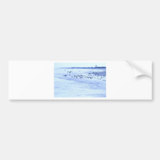 HDR Seagulls Checking Out Beach Coastline Bumper Sticker