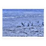 HDR Seagulls Together Beach Watching Ocean Postcard