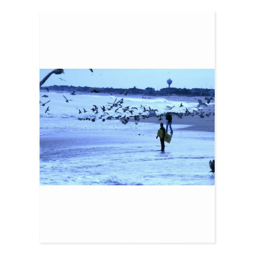 HDR Surfer Lady Feeding Seagulls Post Cards