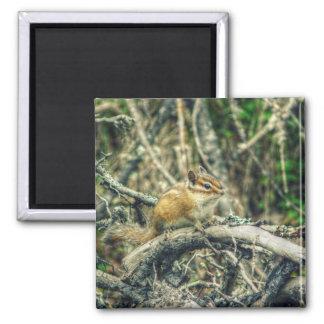 HDR Woodland Chipmunk 2 Inch Square Magnet