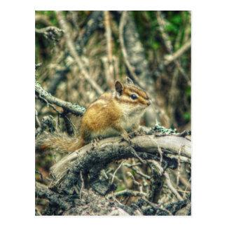 HDR Woodland Chipmunk Post Cards