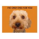 He conseguido solamente los ojos para usted postales