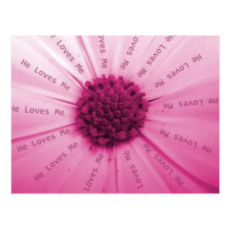 """He Loves Me"" Pink Daisy Postcard"