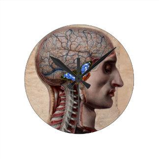Head Anatomy Clock