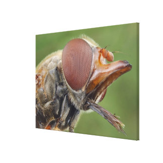 Head and Compound Eye of a Hover Fly 2 Canvas Print