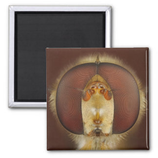 Head and Compound Eyes of a Hover Fly 2 Inch Square Magnet