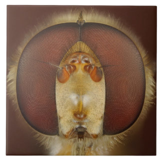 Head and Compound Eyes of a Hover Fly Ceramic Tile