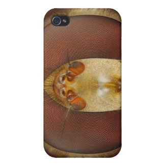 Head and Compound Eyes of a Hover Fly iPhone 4 Cover