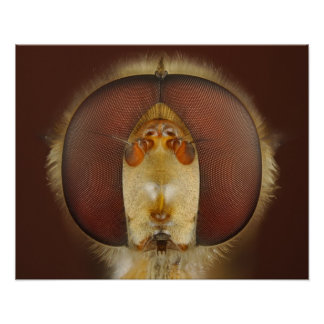 Head and Compound Eyes of a Hover Fly Poster