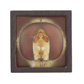 Head and Compound Eyes of a Hover Fly Premium Jewelry Boxes