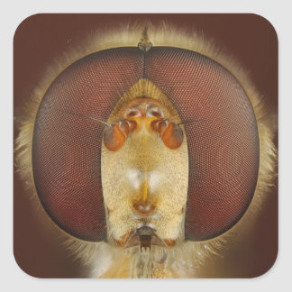 Head and Compound Eyes of a Hover Fly Square Sticker