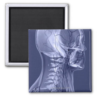 Head and Neck Blood Vessels 2 Inch Square Magnet