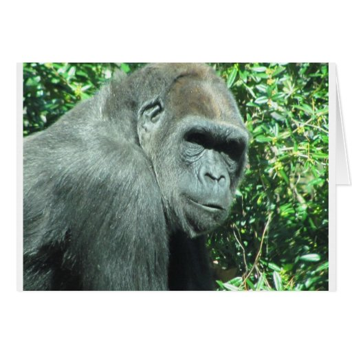 Head and Shoulder Gorilla Greeting Card