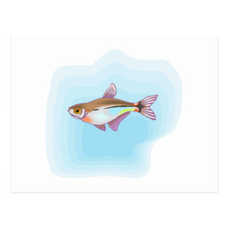 Head And Taillight Tetra Fish Postcards
