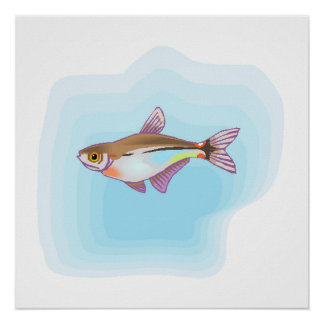 Head And Taillight Tetra Fish Poster