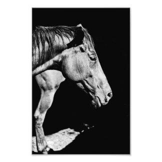head horse's leg photographic print