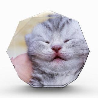 Head newborn silver tabby cat sleeping on hand acrylic award