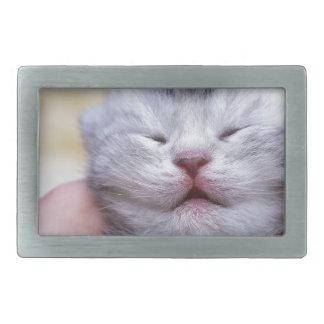Head newborn silver tabby cat sleeping on hand belt buckle