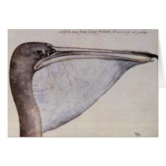 Head of a Brown Pelican Card