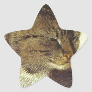 Head of a Cat by Alexander Orlowski Star Sticker