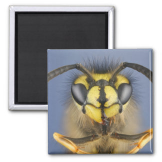 Head of a Common Wasp Magnet